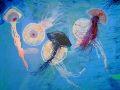 La-danza-de-las-medusas.-2020.-Técnica-mixta-sobre-tela.146-x-114-cm